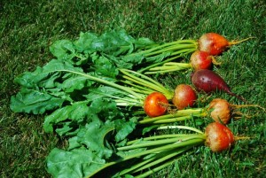 Red & Gold Beets