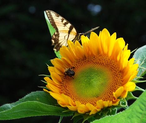 The Buzz on Bees & Bug Killers
