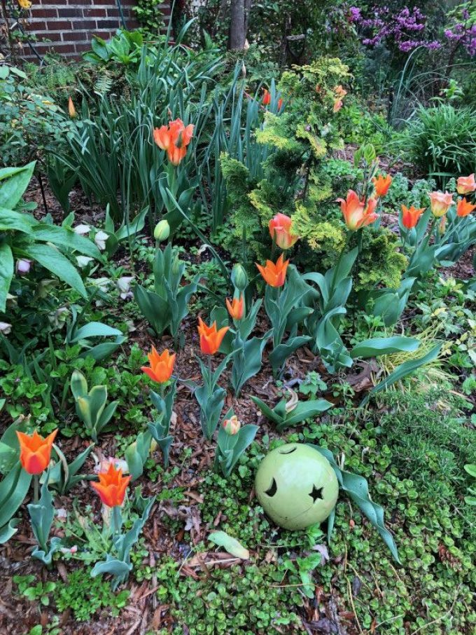 Plant Bulbs now for a Vibrant Spring